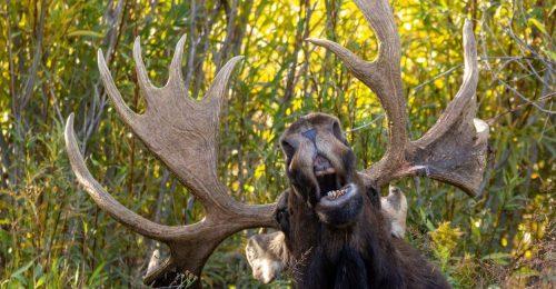 A 3 kedvenc fotónk a Comedy Wildlife Photography döntősei közül