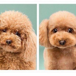 A legédesebb kutyakozmetikai előtte-utána képek