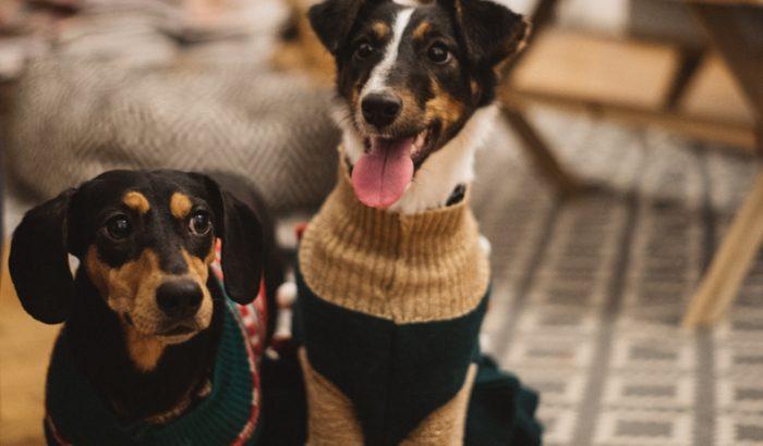 Így készíts házi kutyakekszet karácsonyra