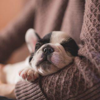 A nők jobban alszanak kutyák, mint férfiak mellett