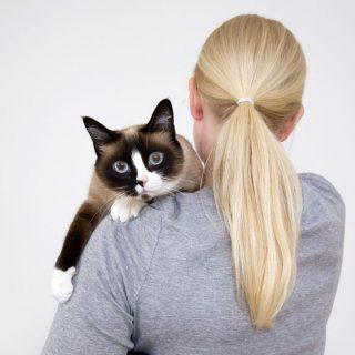 Kipróbáltuk: macskaszitter voltam