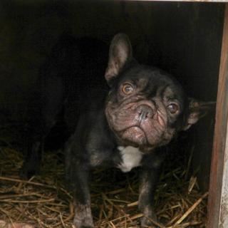 Beteg és szenvedő állatokat termelnek ki a szaporítók