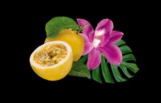 Brazil vibrálás új, zöldebb szépségtermékekkel