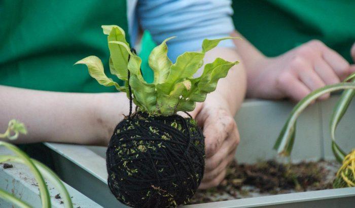 Hódít a kokedama, az új növényültető módszer