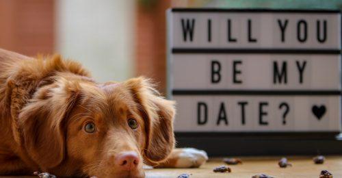 Valentin-nap? Köszönöm, kihagyom