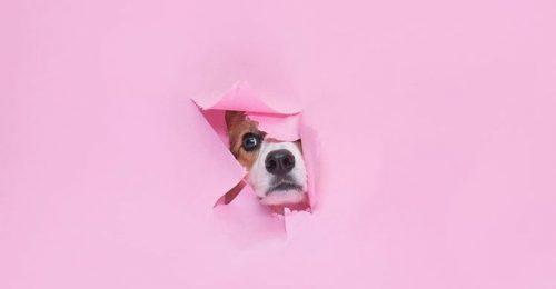 Millennial pink, a tavasz legszebb sminktrendje