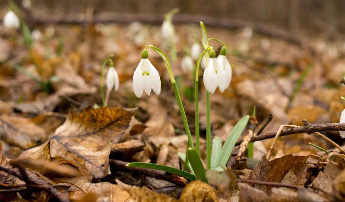Gyere velem vidékre: kora tavaszi tájkép – eső, hóvirág és szélmalmok