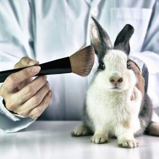 Szépség állatkínzás nélkül: útmutató a cruelty free kozmetikumokhoz