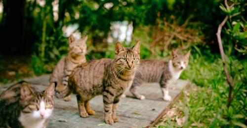 Macskás úticélok, nem csak macskarajongóknak