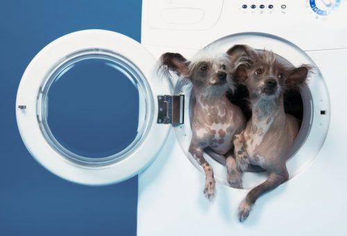 Mit ne tegyél soha a mosógépbe