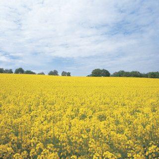 Így élvezhetjük ki maximálisan a tavaszt