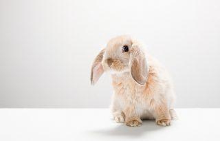 Nyuszivásárlás helyett segíthetünk is a felelős állattartás jegyében