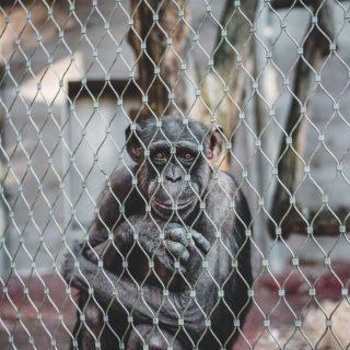 Világszerte cruelty free márka lett a Dove