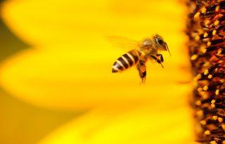 Hol a legfájdalmasabb a méhcsípés?