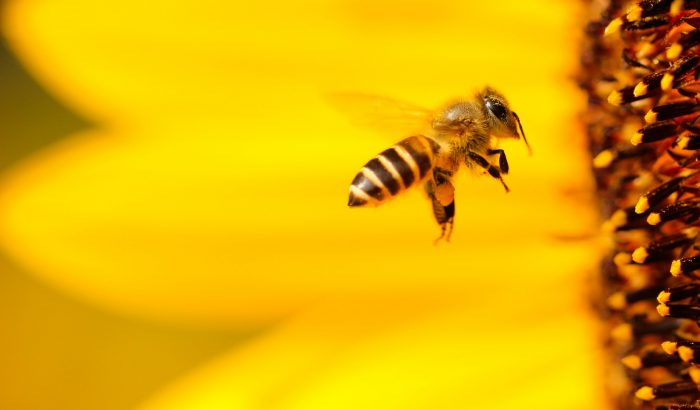 Idén méhecskehotel legyen a terasz dísze