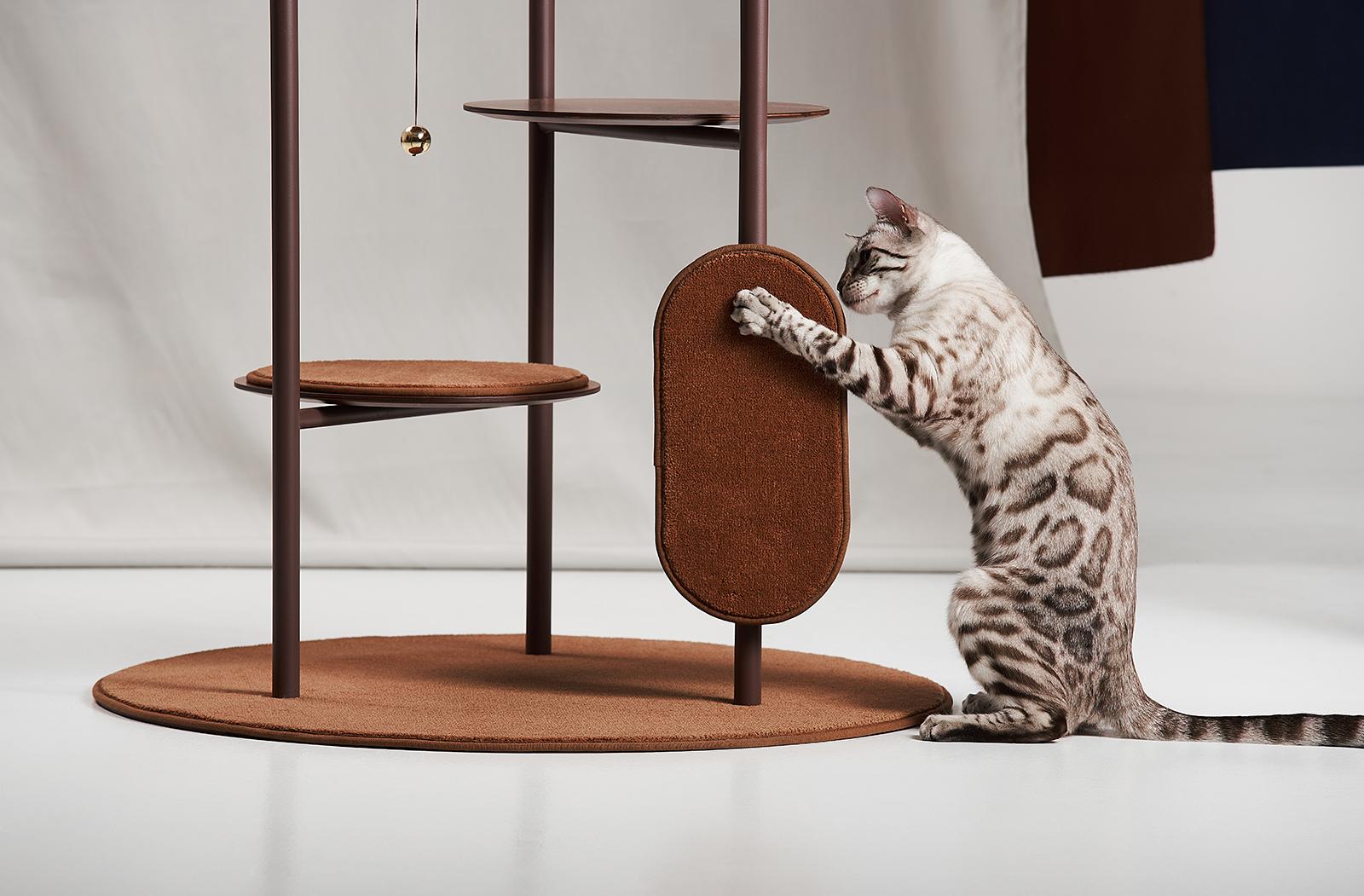 design macska lehetőségek)