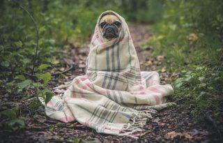 5 teendő, ha a kutyánk utálja az új szerelmünket