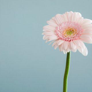 5 szobanövény, ami jó allergia ellen