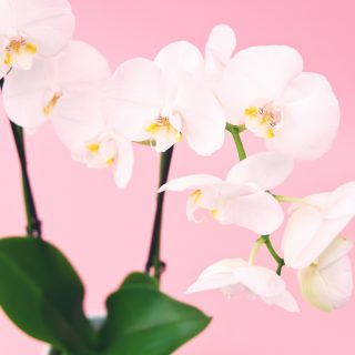 Nevelj szobanövényt a születési sorrend alapján