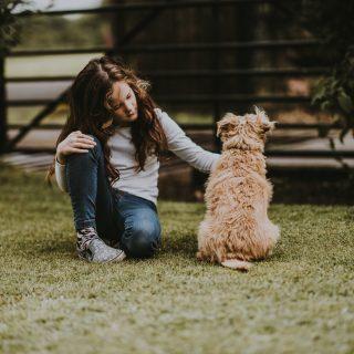 A géneken múlik, lesz-e kutyánk