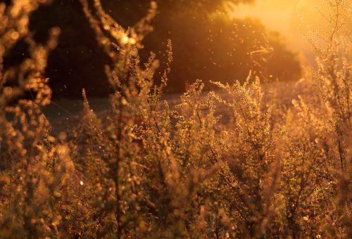5 mítosz a szénanátháról