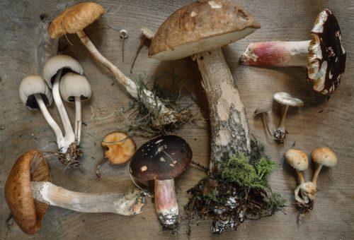 5 ok arra, hogy több gombát együnk