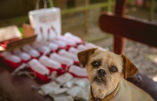 Menhelyi kutyát befogadni nagy felelősség