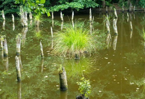 Gyere velem vidékre: erdei barangolás a Gyilkos-tóhoz