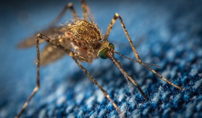 5 szúnyogűző találmány a teraszon töltött estékhez