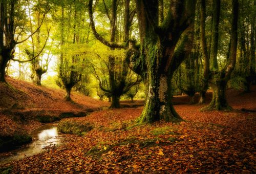10 különleges erdő, amit látni kell