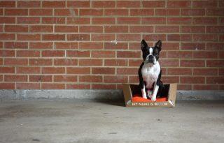 A tökéletes újrahasznosított kutyafekhely – menhelyi kutyáknak is