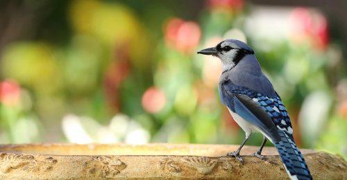 Több fát és madarat – de hogyan?