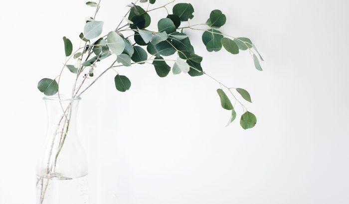 Miért tegyünk eukaliptuszt a fürdőszobába?