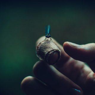 6 jel, hogy a rovarcsípéssel orvoshoz kell mennünk