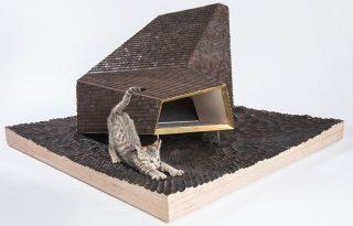 Egy Los Angeles-i építész kóbor cicáknak tervezett álomotthonokat