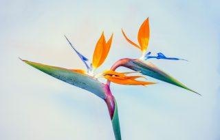 A 3 legtrendibb szobanövény idén ősszel