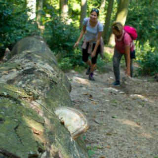 Gyere velem vidékre: bakancs-sétáltatás Szépalmapusztán