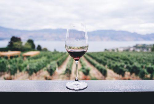 Egyre több szőlőt művelnek organikusan