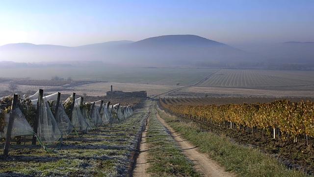 Mi már láttuk: itt az első mozifilm a magyar borról