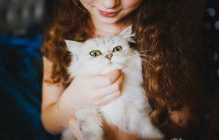 Macskaoltás segíthet, ha allergiás a gazdi