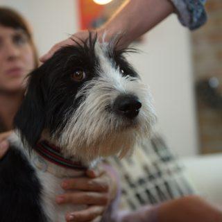 Klippremier: Eke Angéla szerint is kutyát örökbefogadni jó