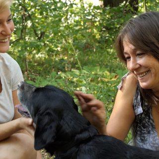 Híres magyarok mutatják be a menhelyi kutyákat