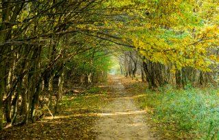 Gyere velem vidékre: őszi színek a Koloska-völgyben