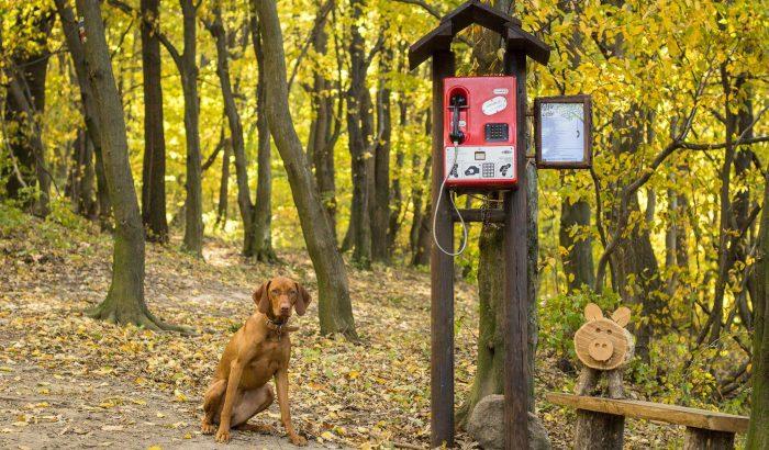 Életre kel Örkény novellája: verselő telefon a pilisszentlászlói erdőben