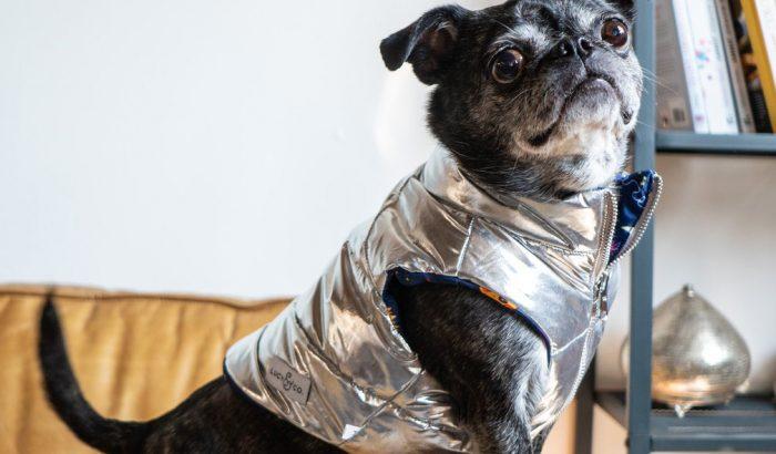 A kutyáknál is hódítanak a metálszínű mellények