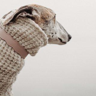 Kifinomult nyakörvek magyar márkától