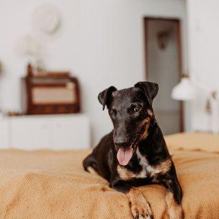 Egy hátránnyal induló kutyával is teljes lehet az élet