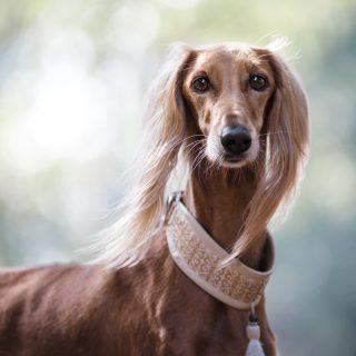 Hány éves a kutyánk emberi években?
