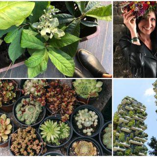 Városban, zöldben – új rovatot indítunk urbánus természetkedvelőknek