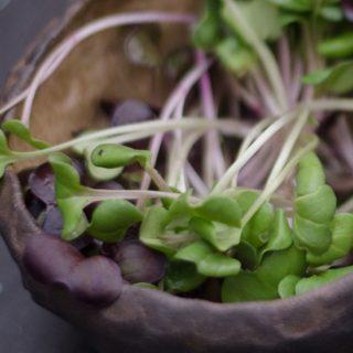 Mikrozöldek: egészség és szépség a tányéron